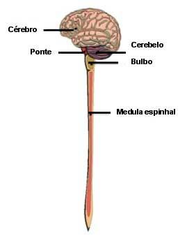 Sistema Nervoso Central (SNC)
